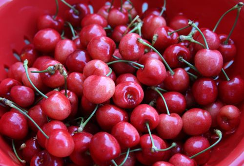 Bowl-cherries